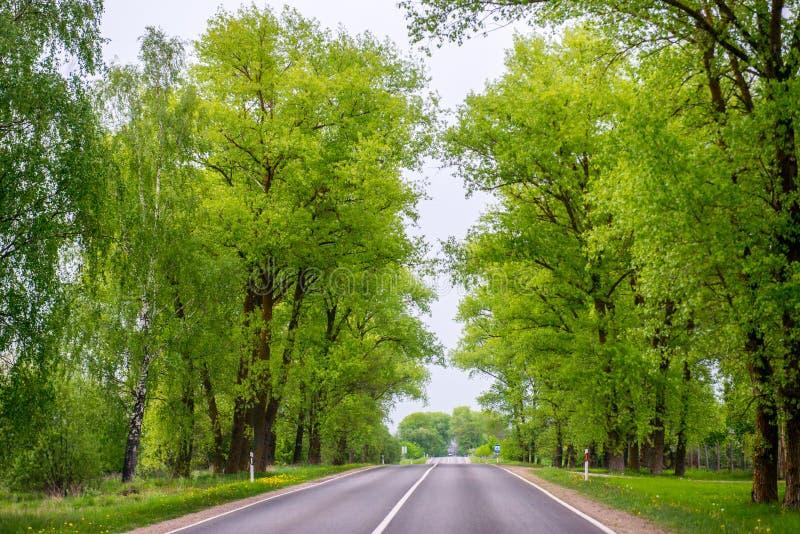 柏油路和新鲜的绿色春天树挖洞 免版税库存图片