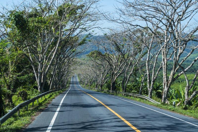 柏油路有自然和野生生物视图围拢与赤裸热带树 免版税库存照片
