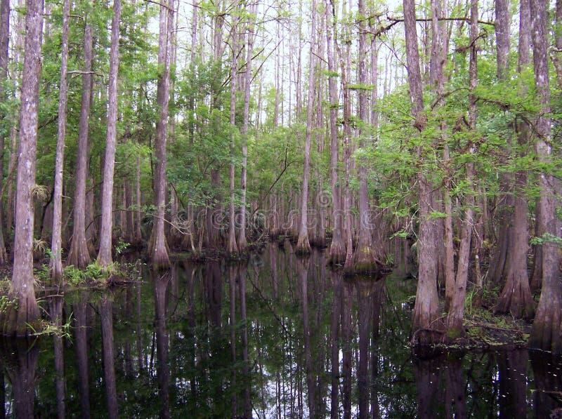 Download 柏沼泽 库存图片. 图片 包括有 横向, 气候, 结构树, 农村, 国家(地区), 绿色, 佛罗里达, 环境 - 178329