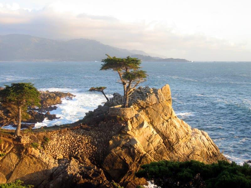 柏著名孤立结构树 免版税库存照片