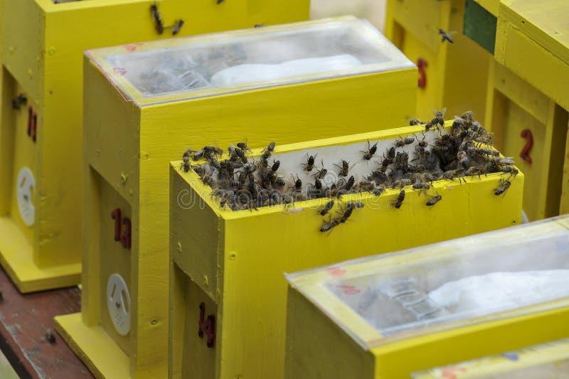 某一联接的蜂房 库存图片