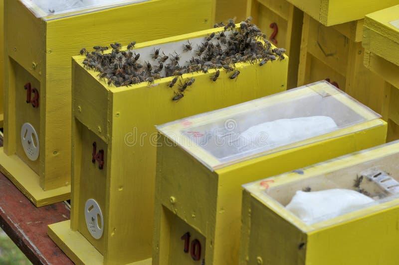 某一联接的蜂房 免版税库存图片