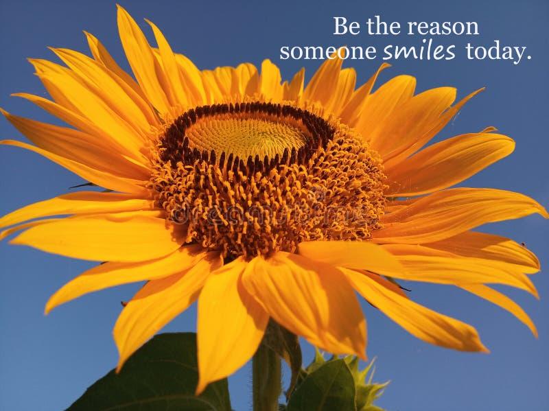 某人今天微笑的激动人心的诱导行情是原因 当美丽的大&唯一向日葵开花在特写镜头 免版税库存图片