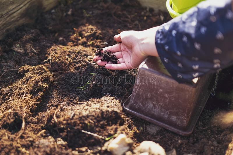 某人在土壤倾斜并且地面为庭院做准备 免版税库存图片