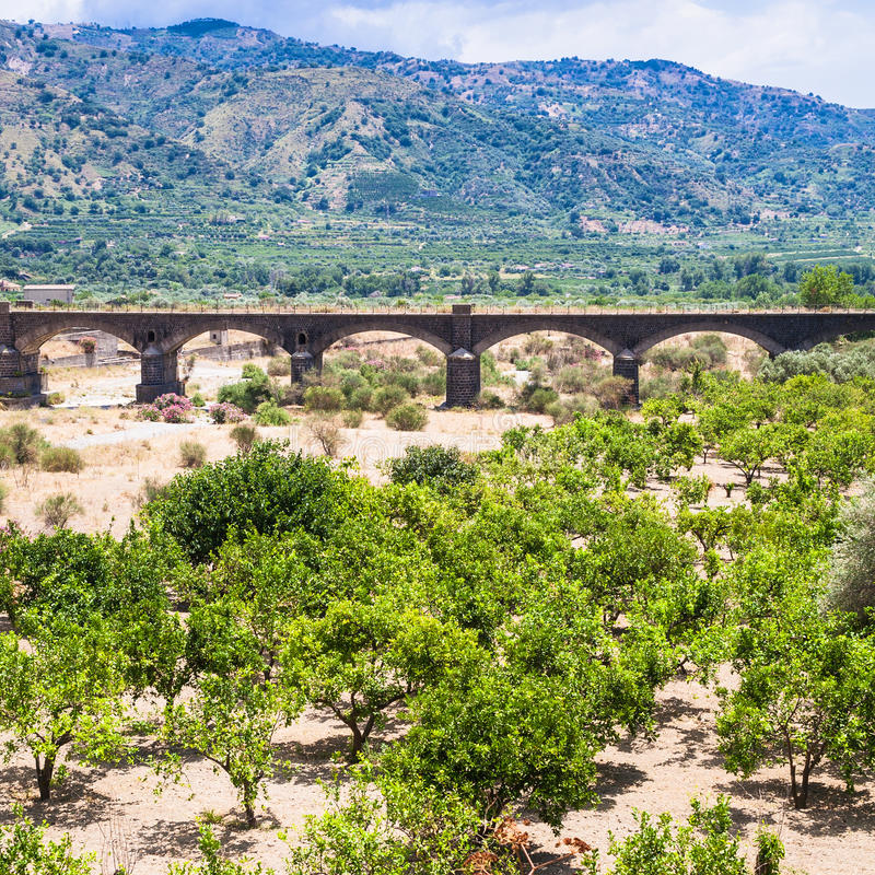 柑橘庭院在阿尔坎塔拉河谷在西西里岛 免版税库存照片