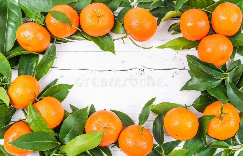 柑橘新鲜水果 图库摄影
