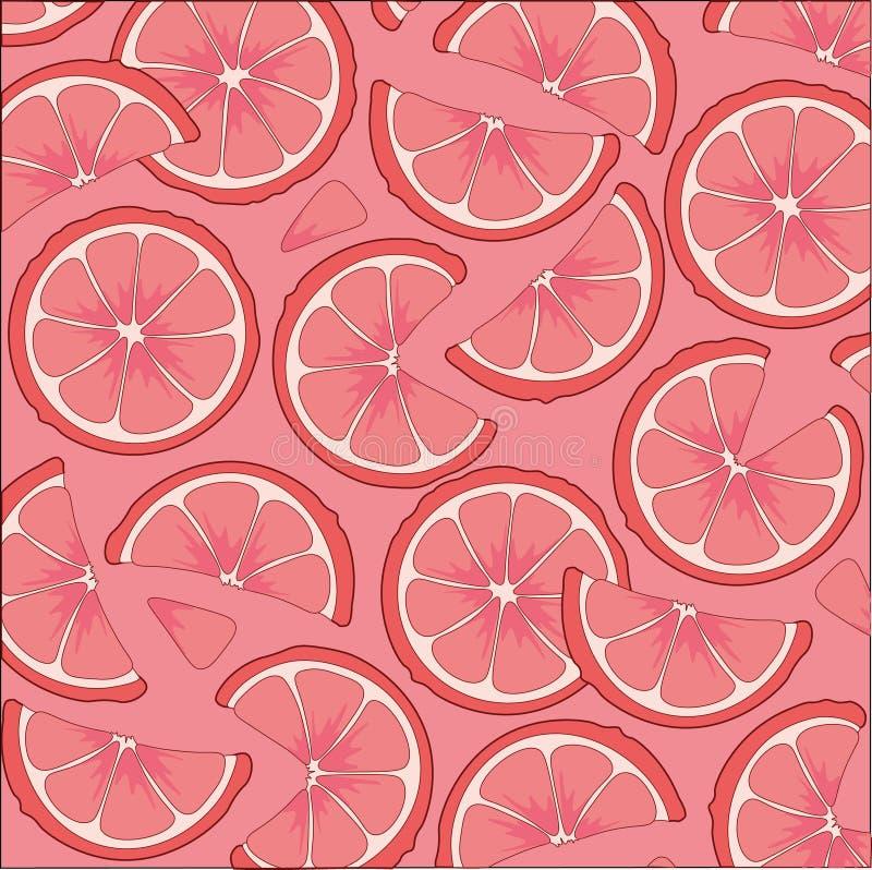 柑橘水果葡萄柚 在桃红色背景的葡萄柚切片 向量例证
