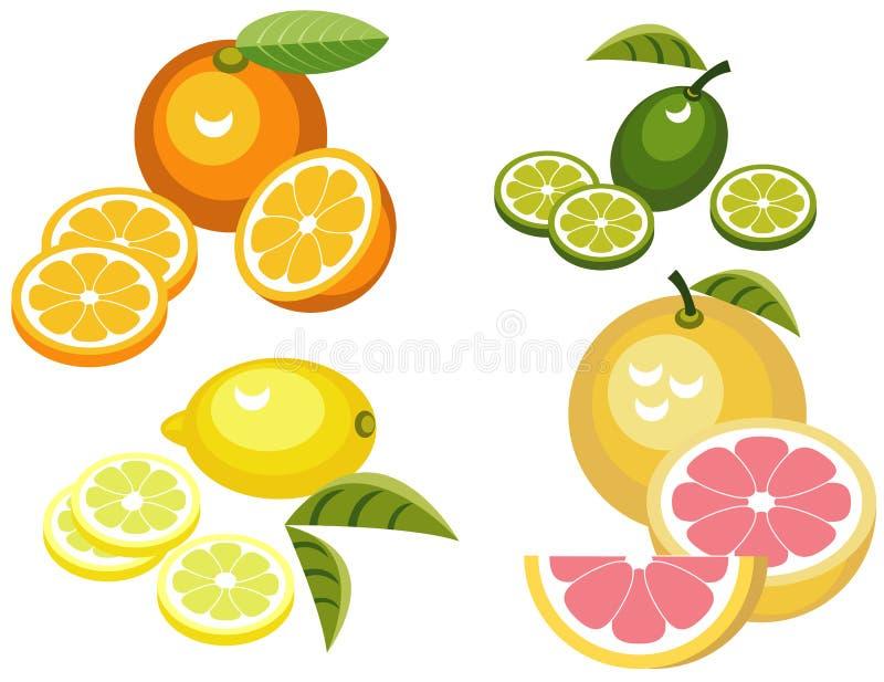 柑橘水果 向量例证