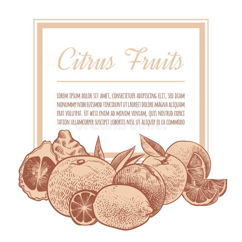 柑橘背景 手拉的剪影桔子,乱画异乎寻常的柑橘水果 柠檬、葡萄柚和石灰葡萄酒传染媒介 库存例证