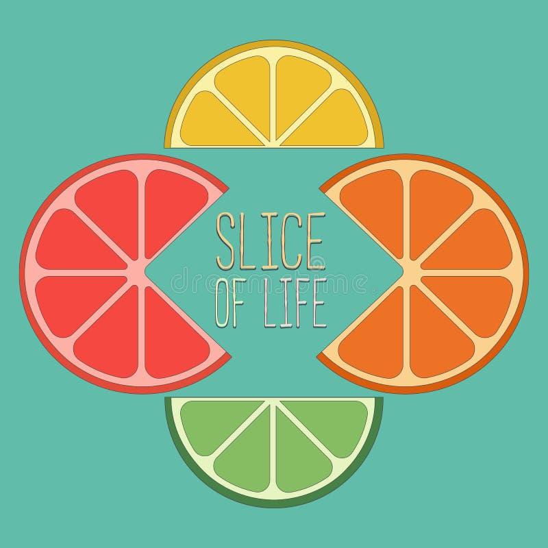 柑橘被切的混合 向量例证