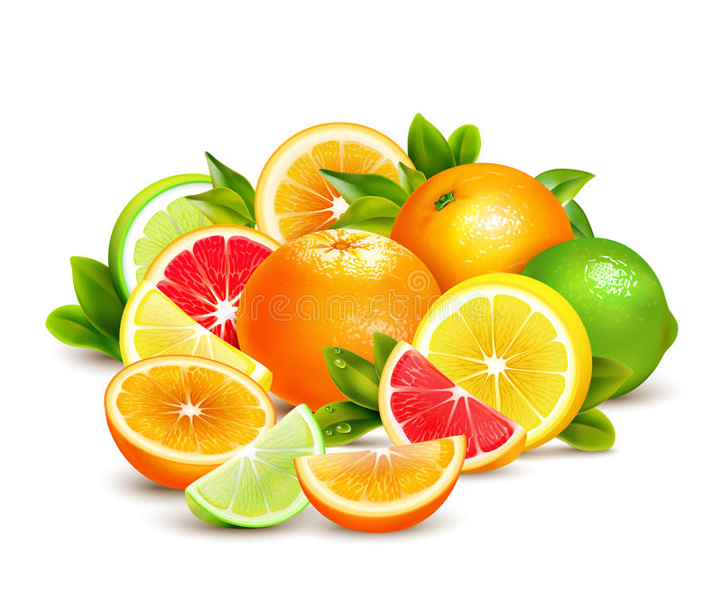 柑橘水果汇集现实构成 向量例证