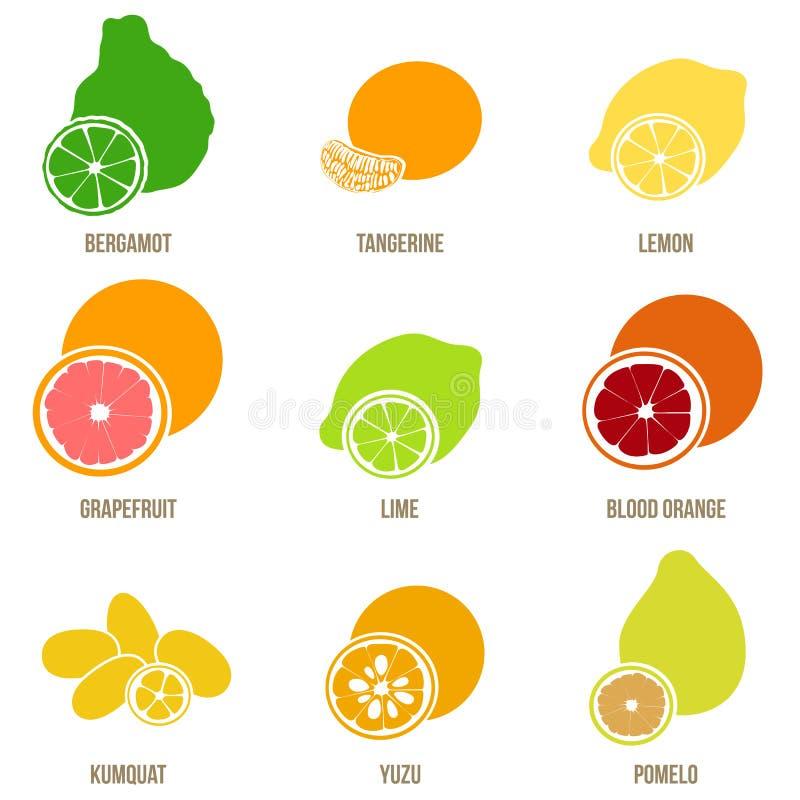 柑橘水果舱内甲板集合、整个果子和切片 库存例证