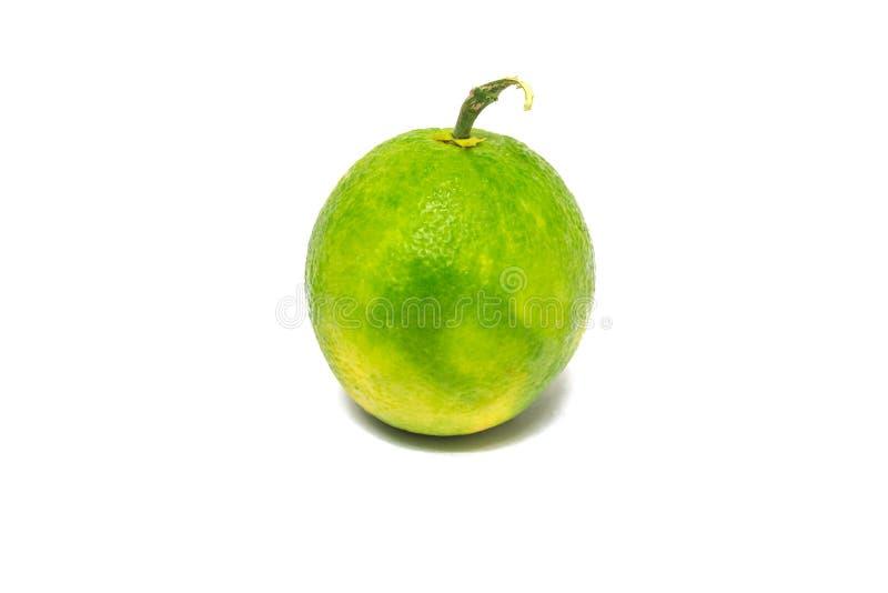 柑橘水果,白色背景 免版税库存图片