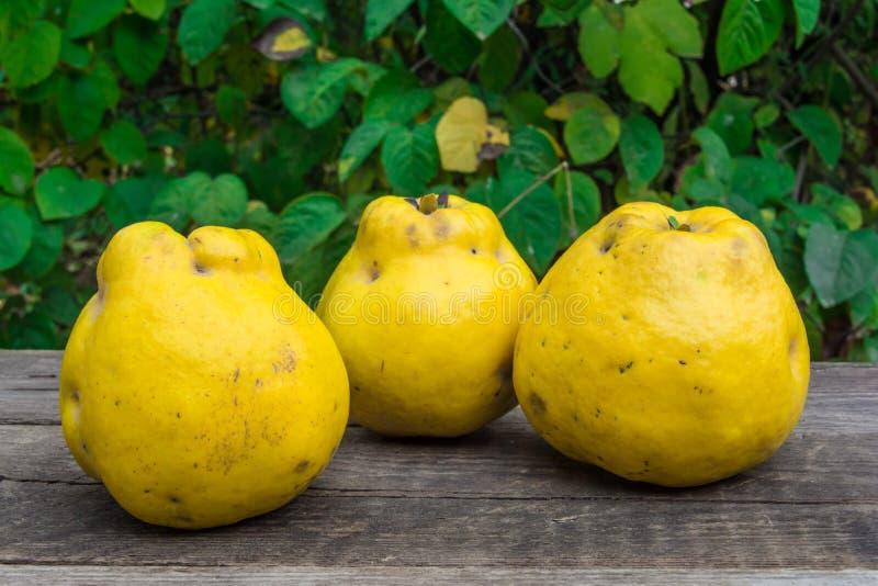 Download 柑橘 库存照片. 图片 包括有 食物, 庄稼, 黄色, 绿色, 膳食, 柑橘, 室外, 水多, 本质, 成熟 - 62528774