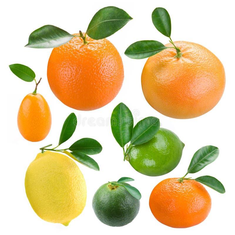 柑橘 库存照片