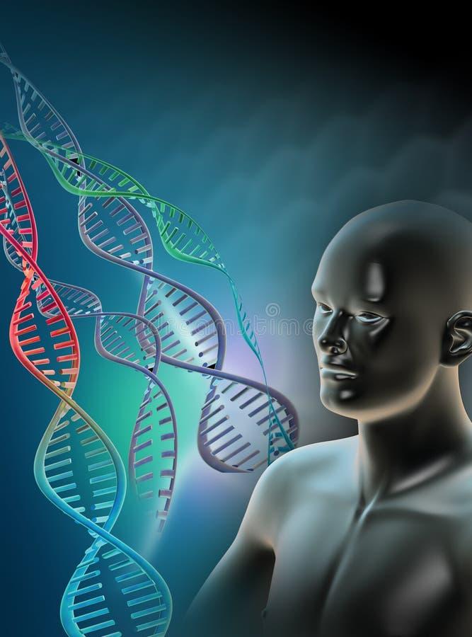 染色体人 库存例证