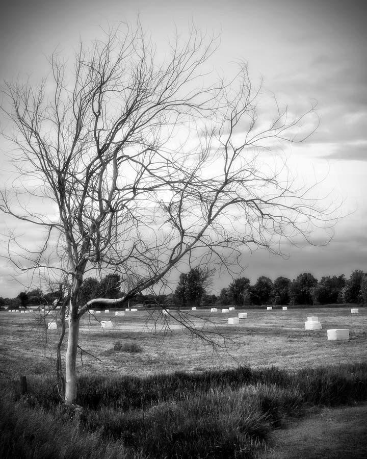 染黑停止的令人毛骨悚然的结构树白&# 免版税图库摄影