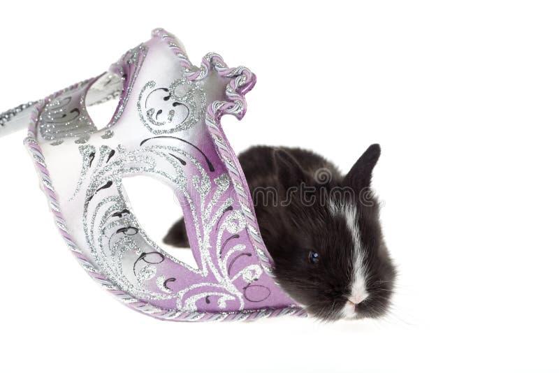 染黑兔宝宝威尼斯式狂欢节的屏蔽 免版税图库摄影