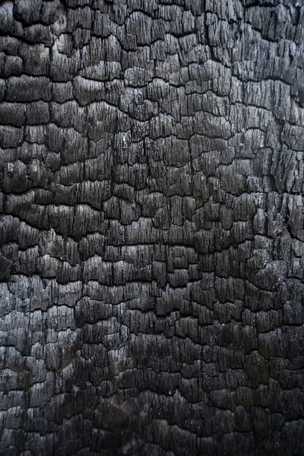 染黑在森林火灾烧的被烧焦的木日志内部 库存图片