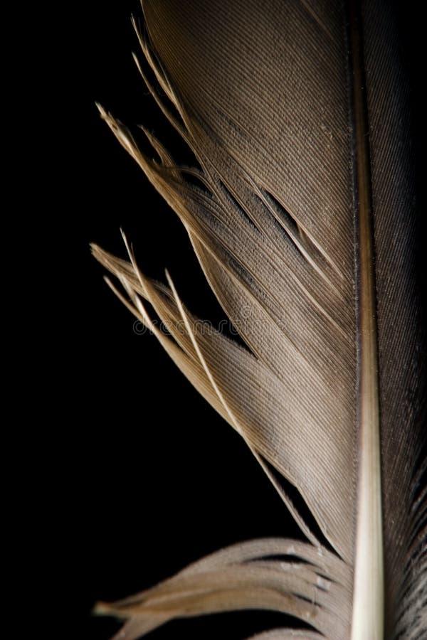 染黑接近的羽毛  免版税库存照片