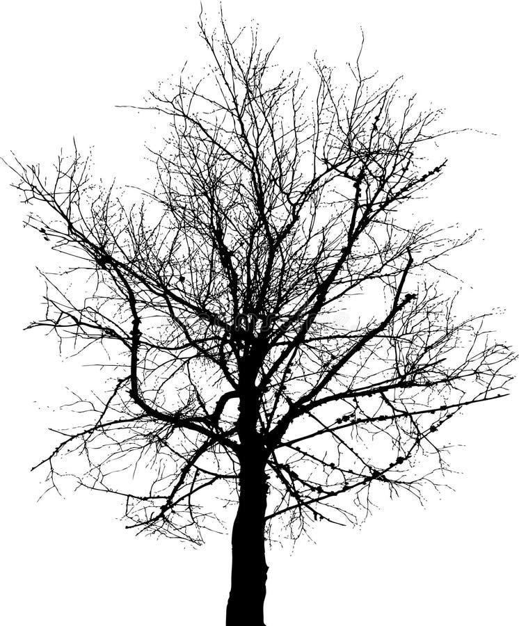 染黑结构树 库存例证