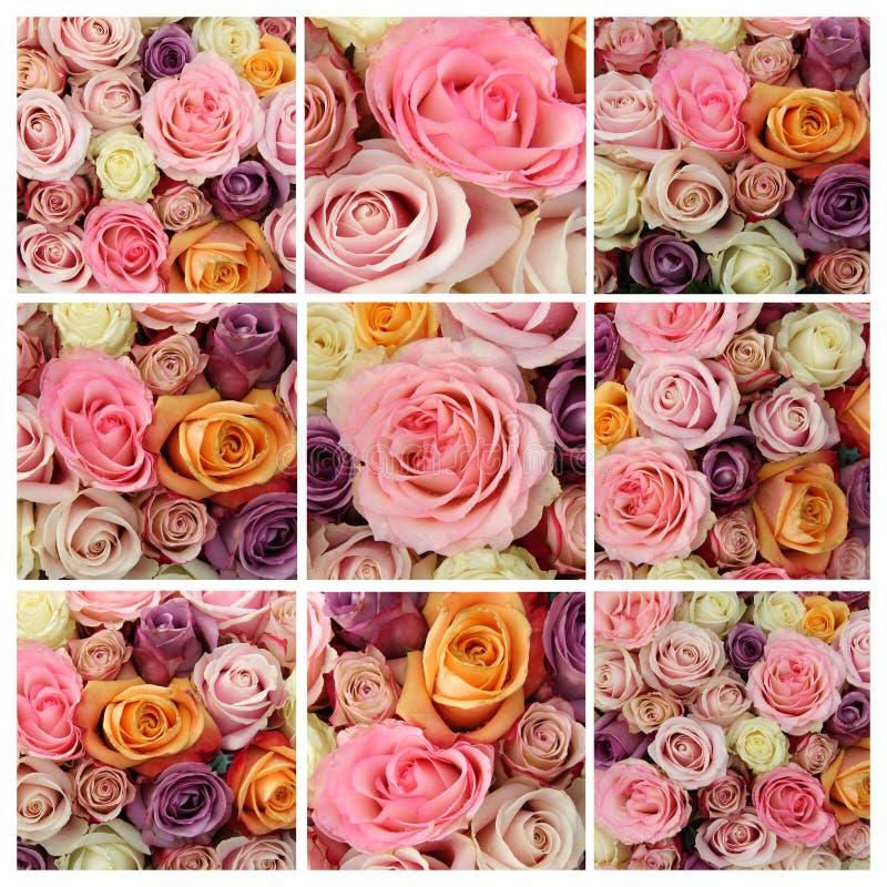 柔和的淡色彩玫瑰拼贴画 免版税图库摄影