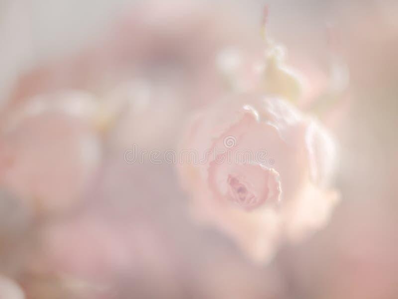 柔和的淡色彩玫瑰软的桃红色背景或背景文本和问候的 免版税库存照片