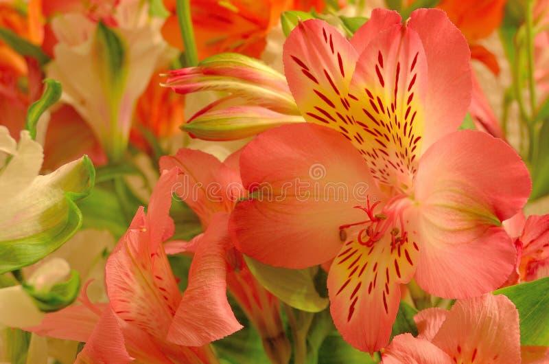 柔和的花束德国锥脚形酒杯 免版税库存照片