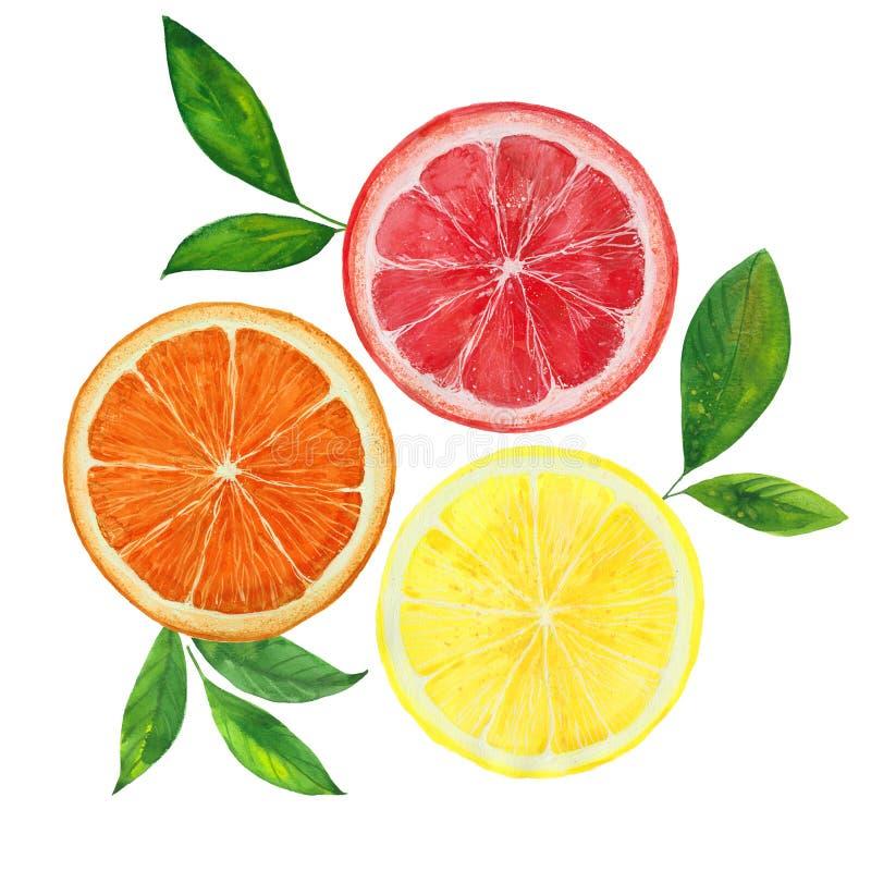 柠檬、葡萄柚和桔子 库存例证