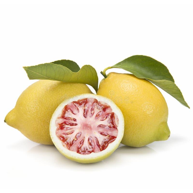 柠檬和蕃茄 库存图片