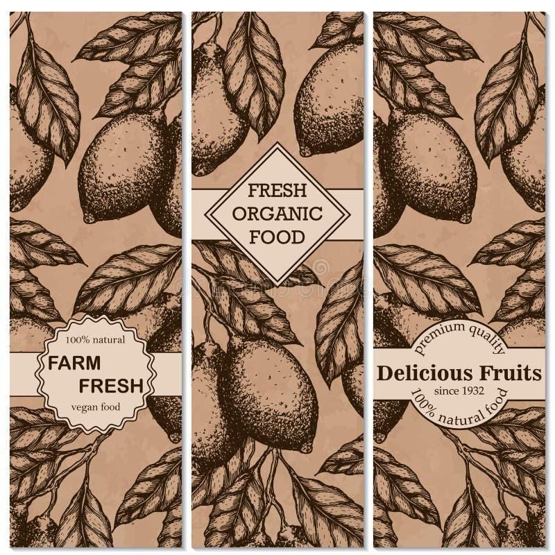 柠檬垂直的葡萄酒横幅收藏 柠檬手拉在墨水例证 库存例证