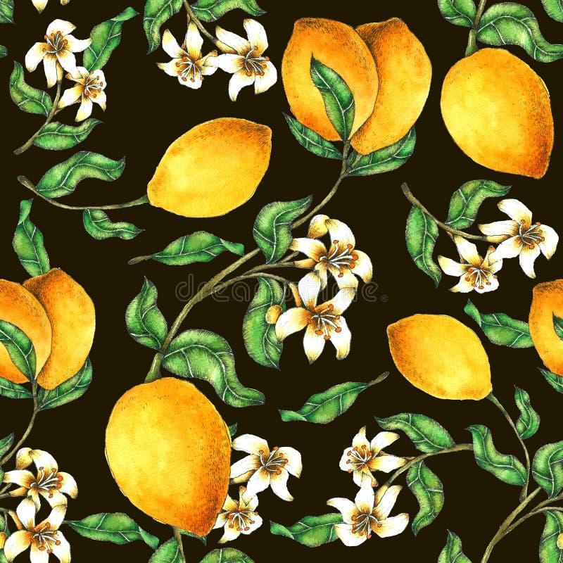 柠檬无缝的样式手画在水彩 库存例证