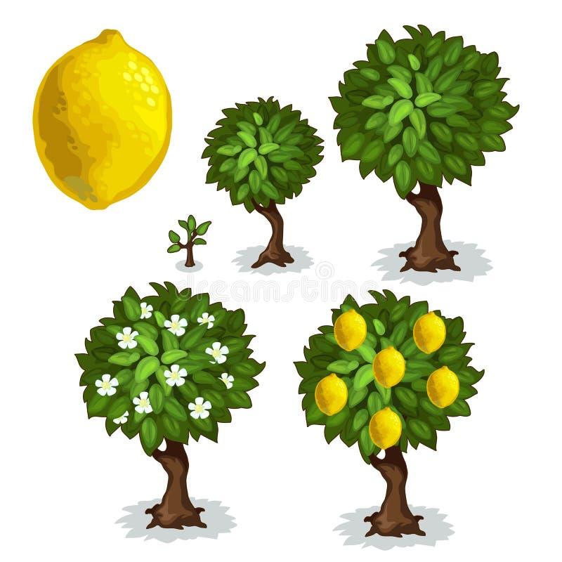 柠檬树的种植和耕种 向量 向量例证