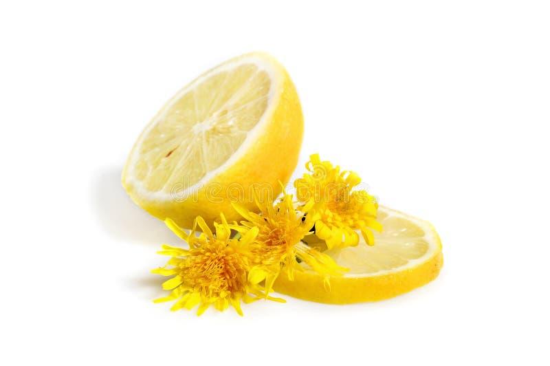 柠檬用蒲公英 库存照片