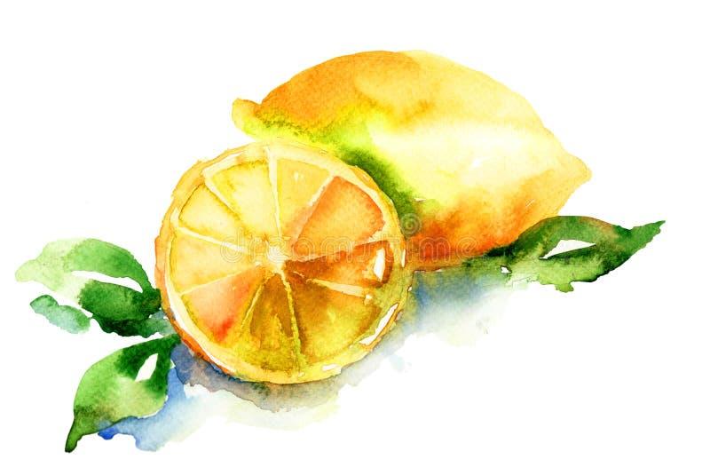 柠檬的水彩例证 向量例证