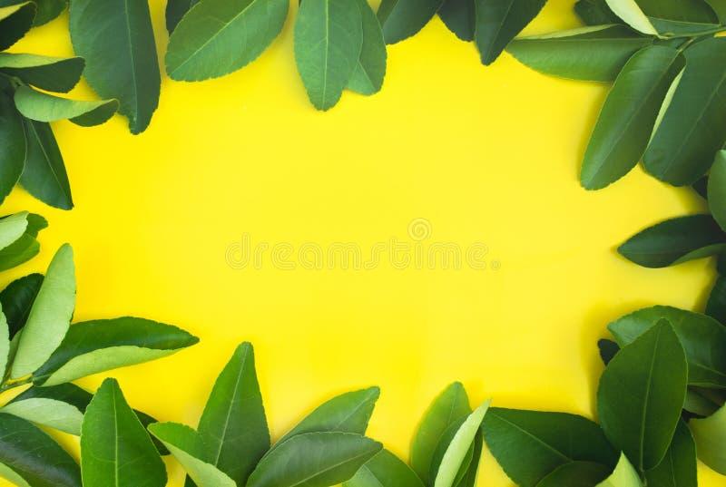 柠檬,橙色叶子样式背景顶视图  果子,菜概念想法  自然舱内甲板位置 免版税库存照片
