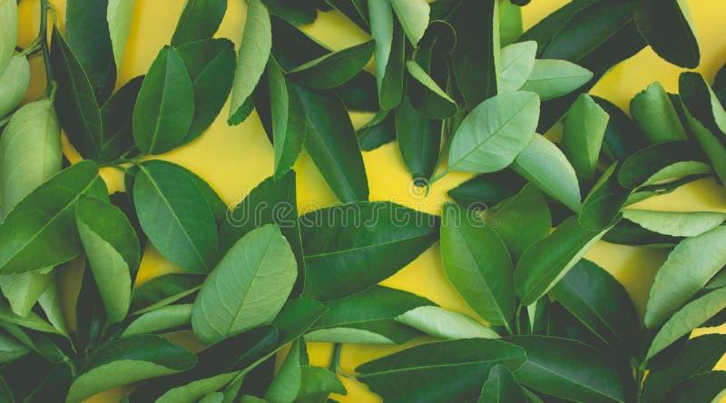 柠檬,橙色叶子样式背景顶视图  果子,菜概念想法  自然舱内甲板位置 免版税库存图片