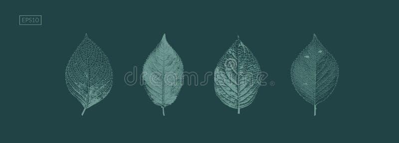 查出在绿色 秋叶 向量例证