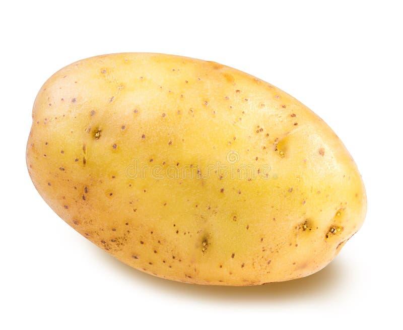 查出的土豆白色 库存照片