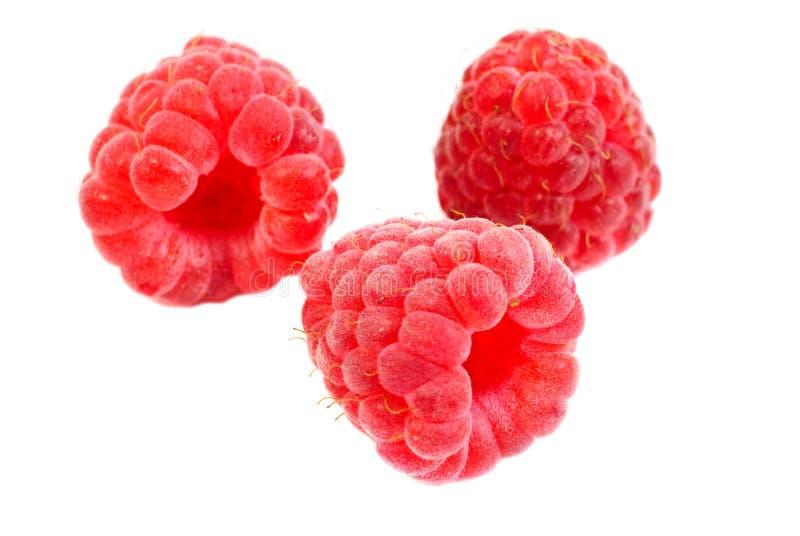 查出的宏观莓 免版税库存照片