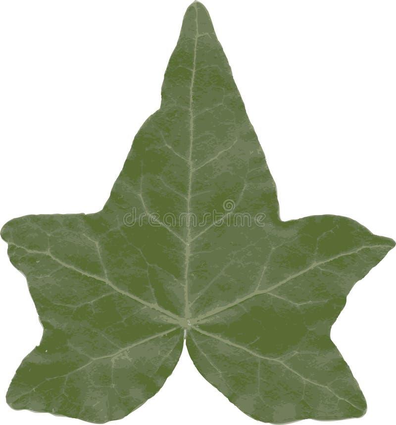 查出的常春藤叶子 向量例证