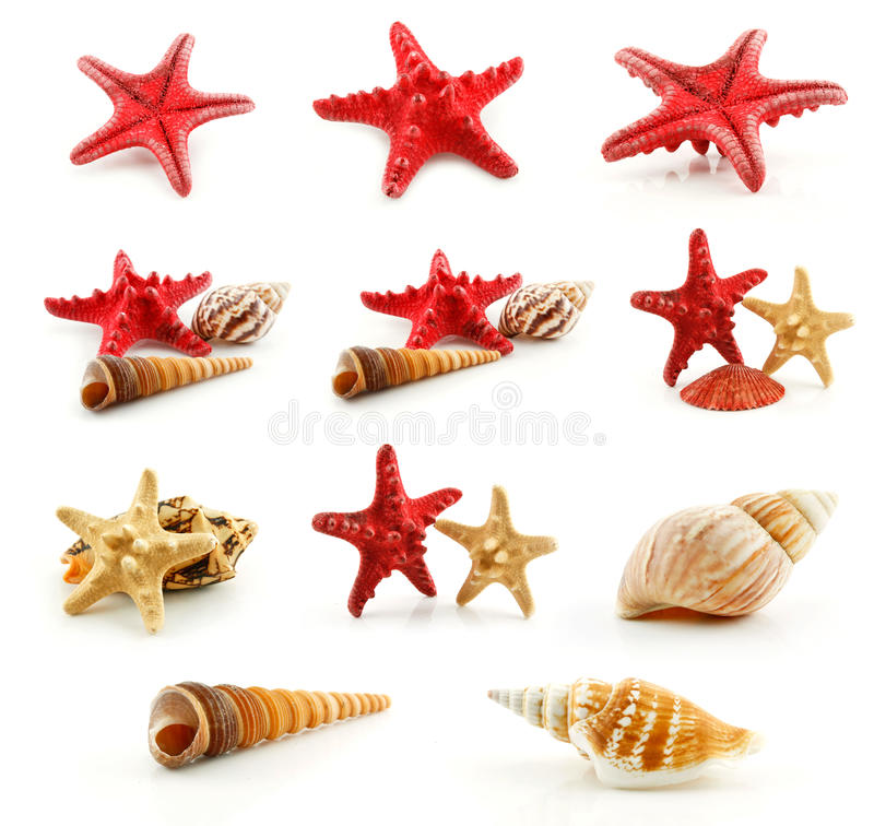 查出的扇贝贝壳设置了海星 库存图片