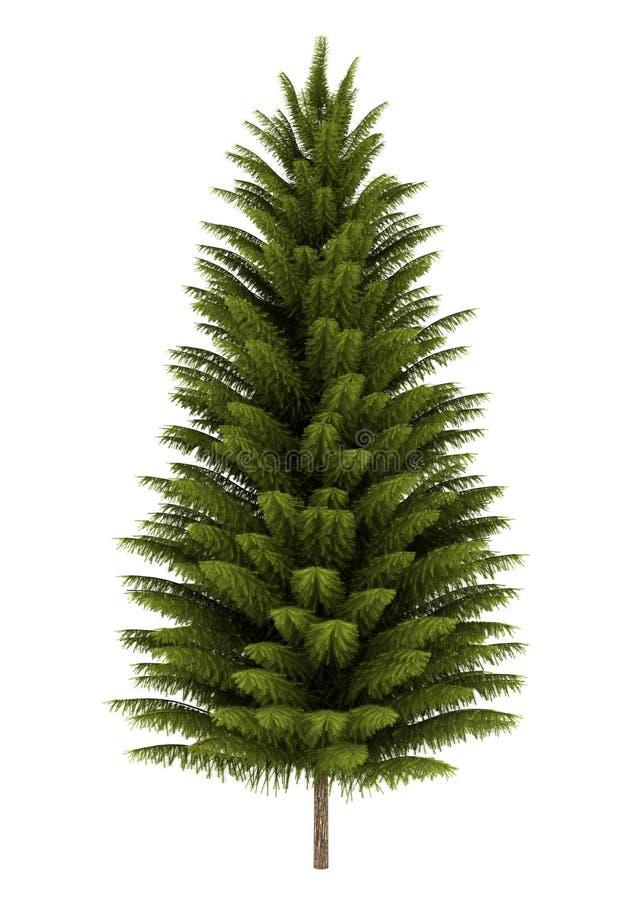 查出的挪威云杉结构树白色 皇族释放例证