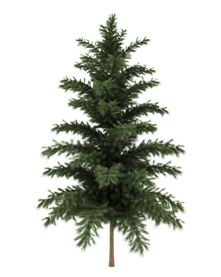 查出的杉木苏格兰语结构树白色 库存例证