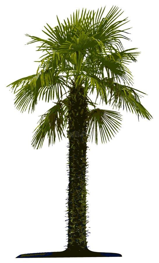 查出的棕榈树 向量例证