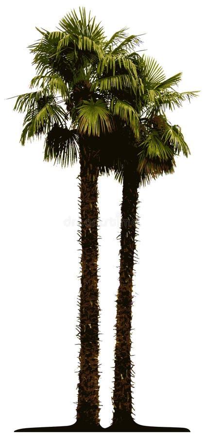 查出的棕榈树 皇族释放例证