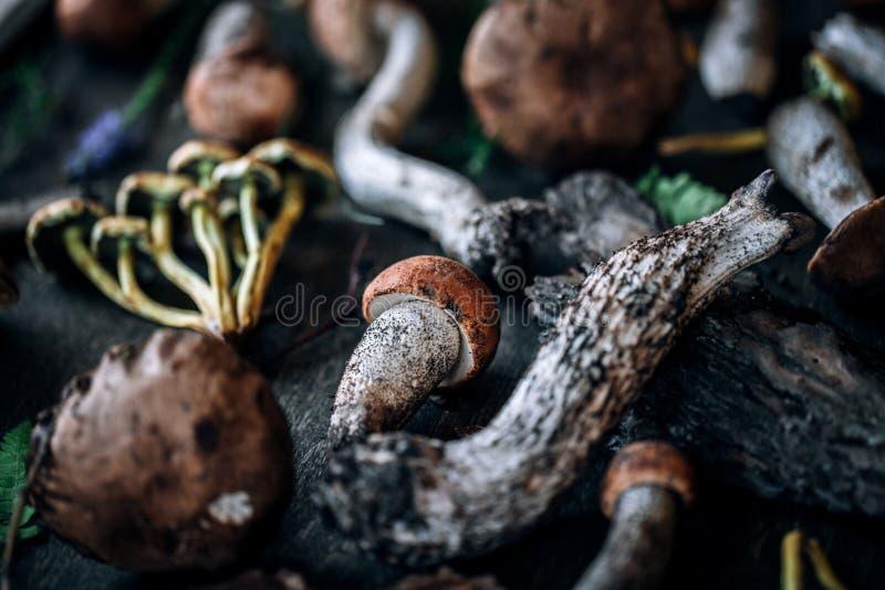 查出的森林采蘑菇白色 免版税图库摄影
