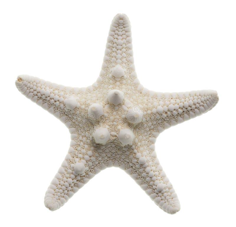 查出的海星白色 免版税库存照片
