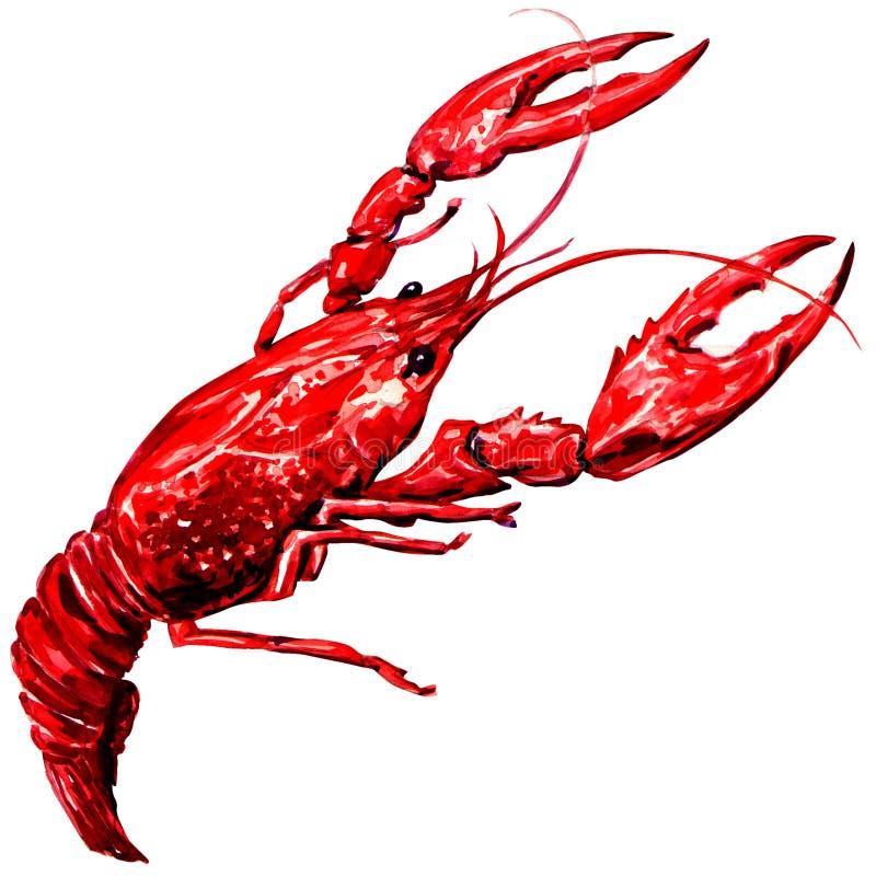 查出的煮沸的小龙虾 免版税库存照片