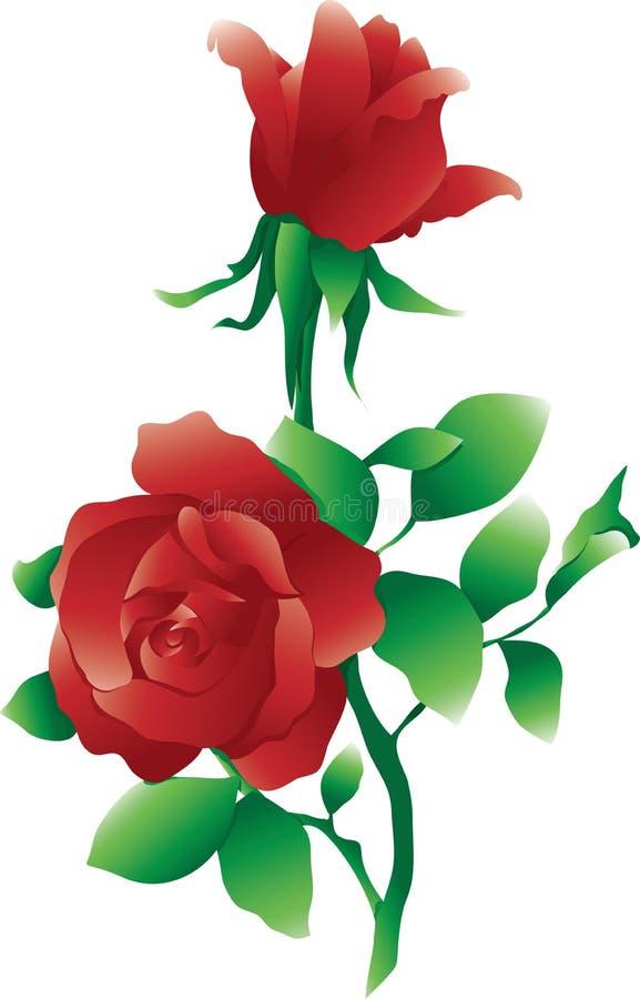 查出的红色玫瑰 库存例证
